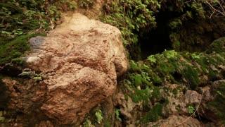 Rocks, Moss, Ferns at Ein Gedi Falls