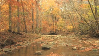 Rocky Creek in Autumn Woods 2
