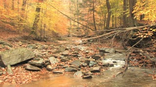Rocky Creek in Autumn Woods 4