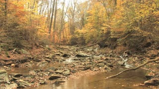 Rocky Creek in Autumn Woods Zoom In