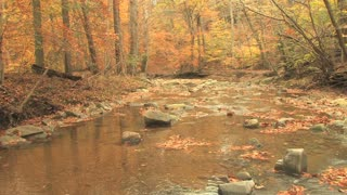 Rocky Creek in Autumn Woods