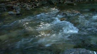 Rocky Creek In Forest