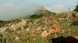 Rocky Mountainside in Israel