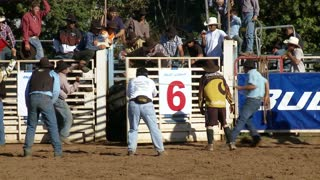 Rodeo Rider Bucked Off Bull
