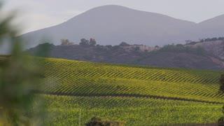 Rolling Vineyard Hills