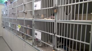 Row of Cat Cages at Animal Shelter