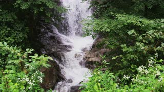 Rushing Waterfall Hidden Among Lush Mountain Flora