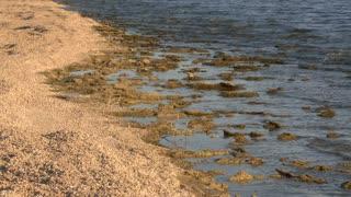 Salton Sea Coast