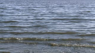 Salton Sea Waves
