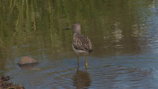 Sandpiper at Lakes Edge