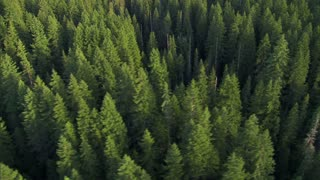 Scenic Forestry Aerial