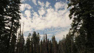 Scenic Pine Forest Cloud Timelapse