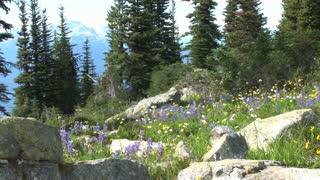 Scenic Rocky Forest Edge