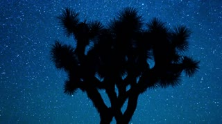 Scenic Starry Sky Joshua Tree Silhouette
