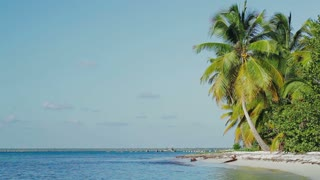 Scenic view of exotic beach. Shore with huge coconut palms and quiet sea against clear blue sky. Summer vacation in tropics