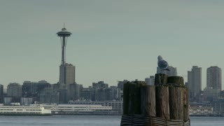 Seagull stands on pier post by Seattle space needle