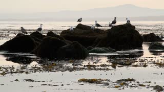 Seagulls On Ocean Rocks