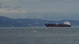 Seagulls Surrounding Oil Tanker