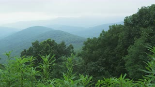 Serene Forested Mountain Ridge, Blue Ridge Mountains