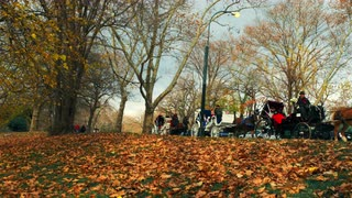 Series of Horse Carriages in Central Park 2