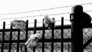 Shaky Cam Past Skulls on Fence Post