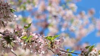 Shallow Focus Blossom Petals