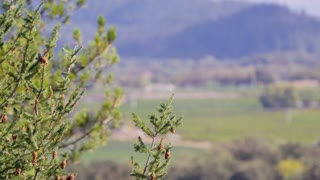 Shallow Focus Napa Valley Landscape