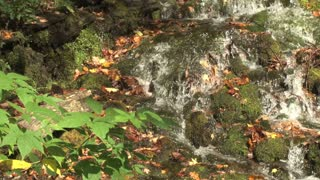 Shallow River Over Moss And Leaves