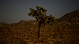 Shooting Stars Over Desert Tree