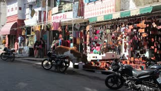 Shops in Udaipur 2