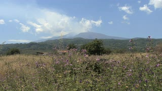 Sicily Etna With Weeds
