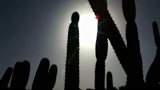 Silhouette of Cactus Cluster in Sun 2
