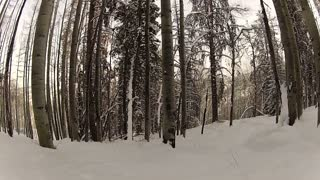 Skiing Through The Trees 2