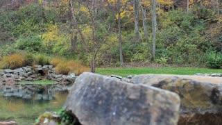 Slide Along Homestead Stream