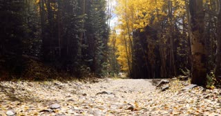 Slider shot across leaf strewn path through the woods in autumn in Colorado