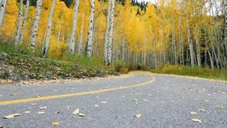 Slider shot of a bicycle riding on a bike trail into woods filled with aspen trees in autumn