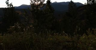 Slider shot of sun burst through pine tree and Rocky Mountains back drop