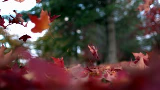 Slow Mo Autumn Leaves Floating to the Ground