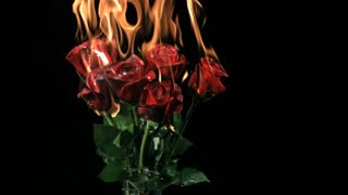 Slow Motion Burning Red Roses