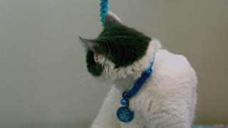 Slow Motion Kitten Playing with Rope Toy 1