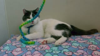 Slow Motion Kitten Playing with Rope Toy 2