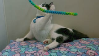 Slow Motion Kitten Playing with Rope Toy 3