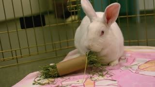 Slow Motion Munching White Rabbit 1