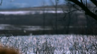 Slow Motion Rack Focus on Snow Goose Flock