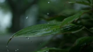 Slow Motion Rain on Plant