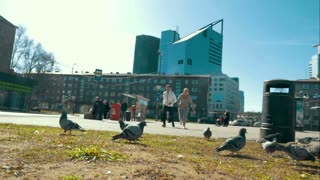 Slow motion steadicam shot of young people jogging in the city. They running to the pigeons which flying away