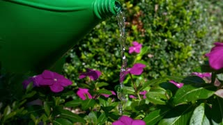Slow Motion Watering Can On Pink Flowers 2