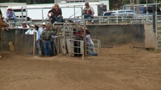 Slow Rodeo Calf Roping