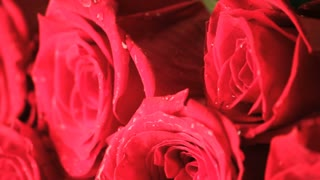 Slowly Rotating Wet Red Rose Bouquet Close Up