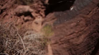 Small Desert Spider Web Blowing in Breeze 2